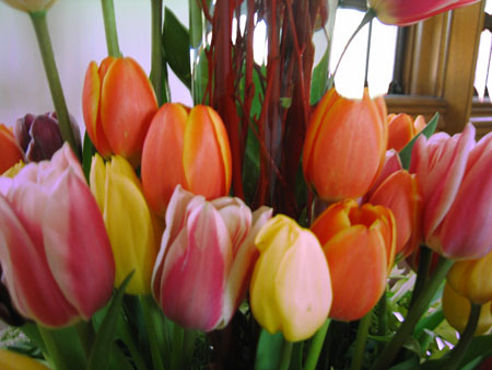 Close up photo of orange, pink and yellow tulips at the exhibition
